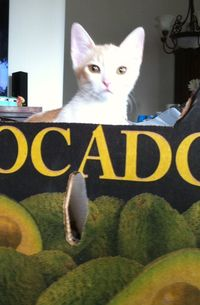 Guess What's In The Avocado Box?