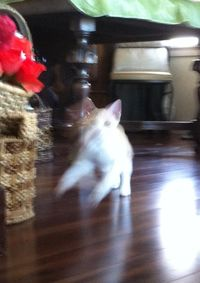 Kitty Hide & Seek Mondays