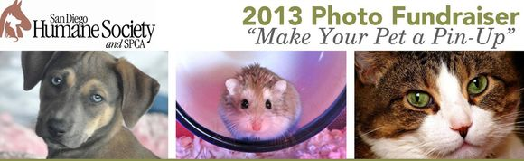 Make Your Pet A Pin-Up Star in San Diego Humane Society's Fundraiser -- It's Not Too Late Enter Your Cute Pet!