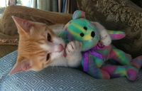 "Kizzme Has a New Pal--Meet Beanie Bear ""Peace"""